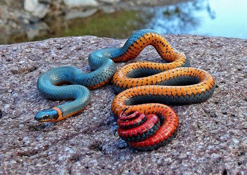 Giải mộng về hiện tượng ngủ mơ thấy rắn