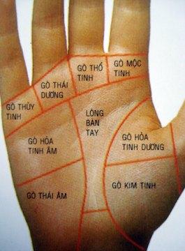 Vị trí và ý nghĩa các gò có trên lòng bàn tay