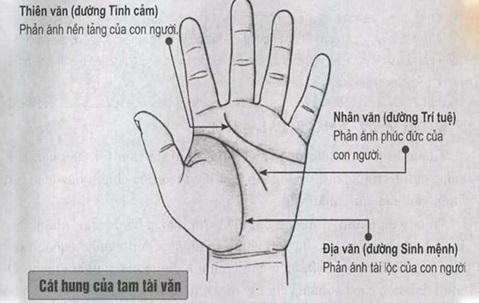 Những đường chỉ tay cơ bản và đường chỉ tay hiếm