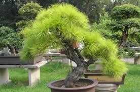 Ngăn chặn và hóa giải sát khí - tác dụng to lớn của cây xanh trong phong thủy